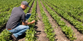 man, field, tablet, grow, plants, jeans
