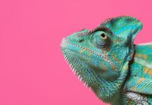 chameleon, adapt, adaptive, adaptive UX