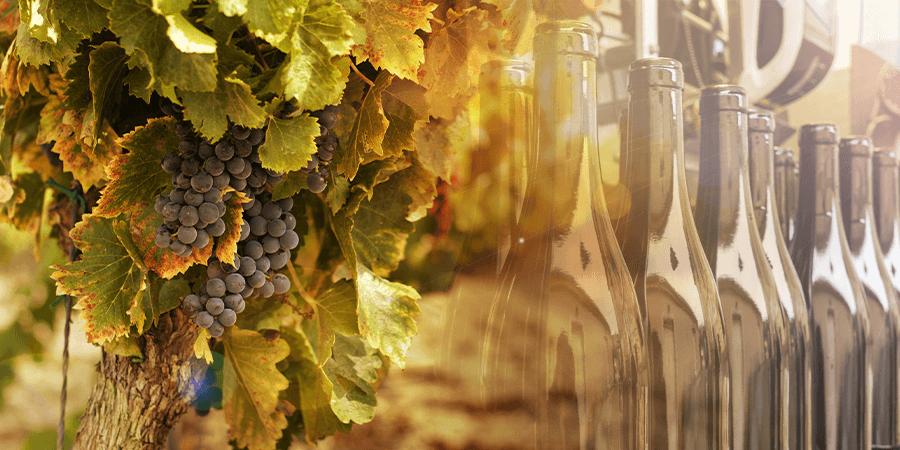 Viña Undurraga, case stuyd, winemaking, wine production, customer success, wine, production visibility